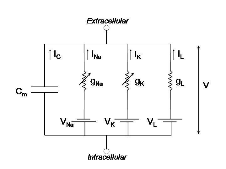 RC circuit diagram of neuron